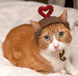 como aprender a tejer paso a paso un gorro para tu gato